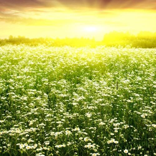 Ich wünsche Dir einen schönen Sommer